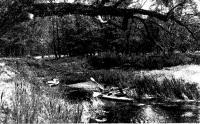 Ширина речки в верховьях невелика