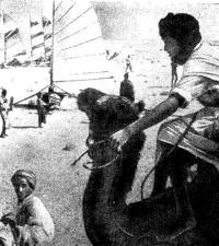 Яхты и верблюды
