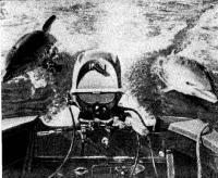 Дельфины «скользят» на волне от глиссирующей мотолодки