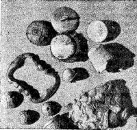 Личные вещи участников экспедиции, найденные в бухте Командор