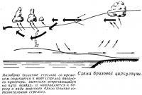 Схема бризовой циркуляции