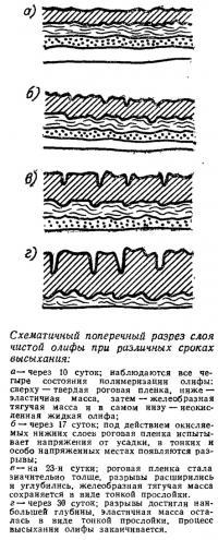 Схематичный поперечный разрез слоя чистой олифы при различных сроках высыхания