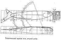 Теоретический чертеж тела летучей рыбы