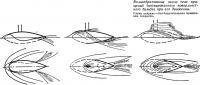 Волнообразование около тела вращения при его движении