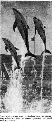 Выпрыгивая из воды, дельфины увлекают за собой минимум брызг