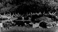 А. Встреча с погонщиками буйволов