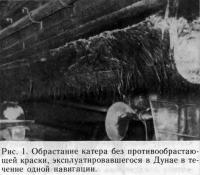 Рис. 1. Обрастание катера без противообрастающей краски