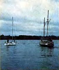 Яхты в ожидании начала гонки