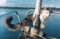 Кот на яхте «Викинг»