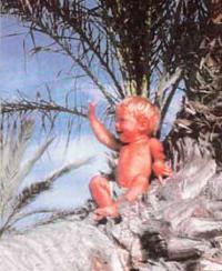 Малыш Савва позирует возле пальмы