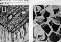 Срезы бальзы и пенопласта типа ПХВ, сфотографированные под микроскопом